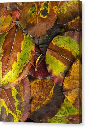 Turning Leaves 4 Canvas Print by Stephen Anderson
