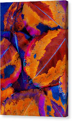 Turning Leaves 5 Canvas Print by Stephen Anderson