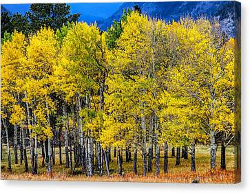Turning Of The Aspens Canvas Print by Juli Ellen