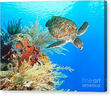 Gorgeous View Canvas Print - Turtle And Coral by MotHaiBaPhoto Prints