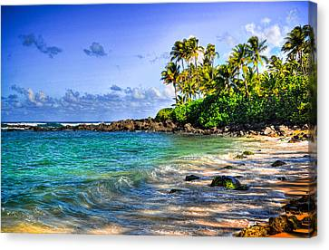 Turtle Beach Canvas Print by Kelly Wade