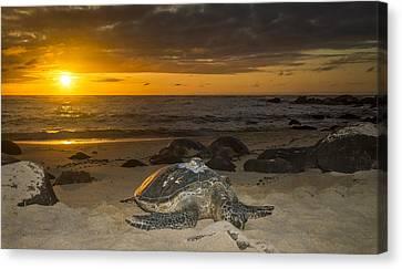 Turtle Beach Sunset Oahu Hawaii Canvas Print