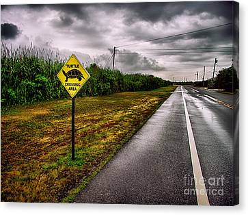 Turtle Crossing Area Canvas Print by Mark Miller