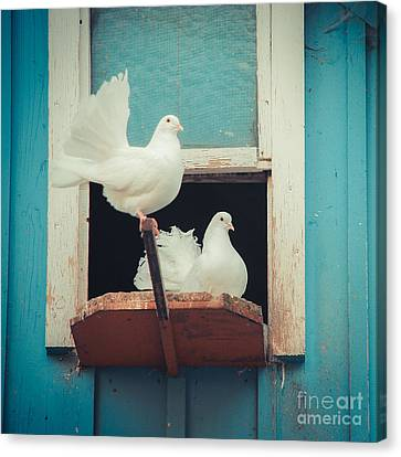 Turtle Doves 1x1 Canvas Print by Hannes Cmarits