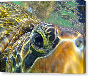 Turtle Eye Canvas Print