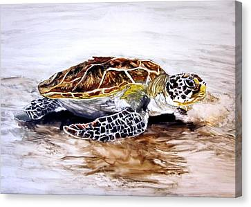 Turtle On The Beach Canvas Print