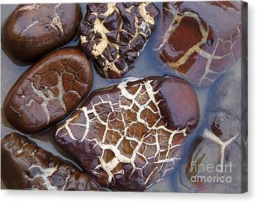 Turtle Or Stone Canvas Print by Kathi Mirto