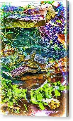 Turtle Pond Fall Canvas Print by John Haldane