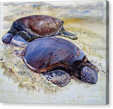 Turtle R And R Canvas Print