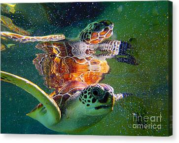 Miami Canvas Print - Turtle Reflection by Carey Chen