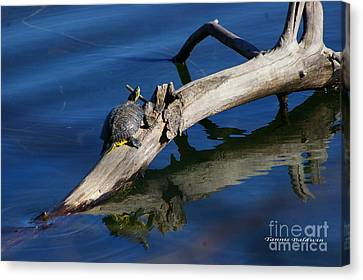 Canvas Print featuring the photograph Turtle Sun by Tannis  Baldwin
