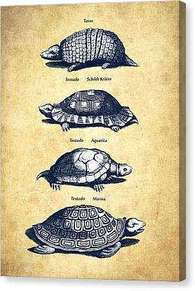 Old Wall Canvas Print - Turtles - Historiae Naturalis - 1657 - Vintage by Aged Pixel