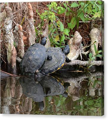 Turtles  Canvas Print by Julie Cameron