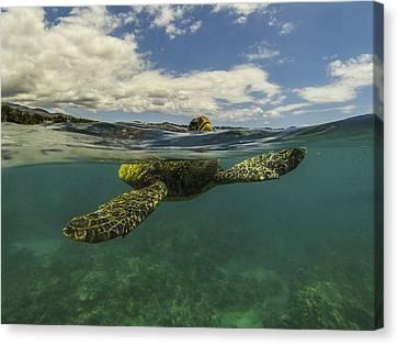 Turtles Need Air Too Canvas Print by Brad Scott