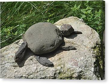 Turtle's Rock Canvas Print