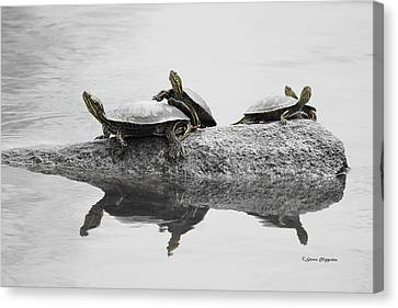 Turtles Canvas Print by Steven Clipperton