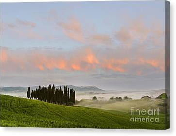 Tuscan Cypresses Canvas Print by Yuri Santin