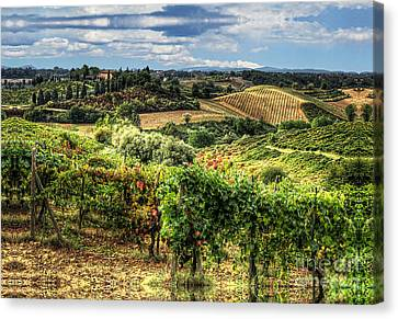 Tuscany Landscape Canvas Print by Tom Dale