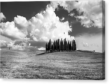 Tuscany Canvas Print by Tony Murray
