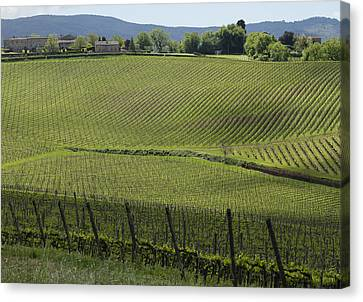 Tuscany Vineyard Series 2 Canvas Print by John Pagliuca