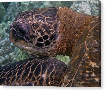 Tutu The Turtle Canvas Print by Ken Fields