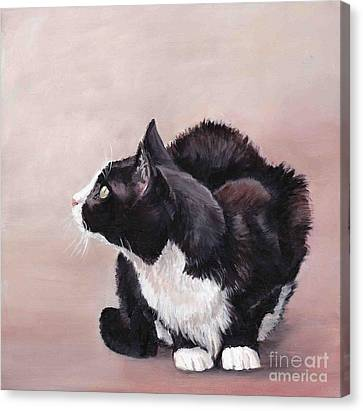 Tuxedo Cat Bird Watcher Canvas Print by Charlotte Yealey