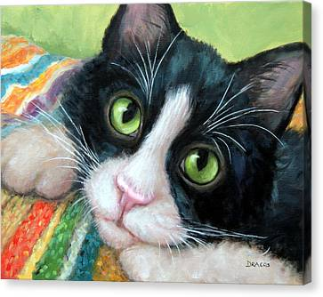 Tuxedo Cat With Blankie Canvas Print by Dottie Dracos