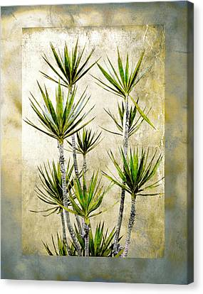 Twiggy Palm Canvas Print by Stephen Warren
