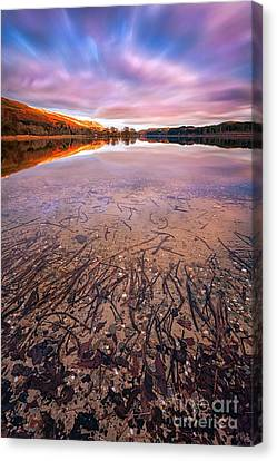 Twigs And Leaves  Canvas Print by John Farnan