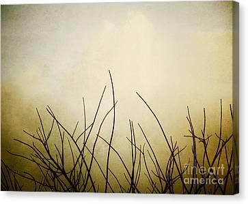 Twigs Canvas Print by Darla Wood