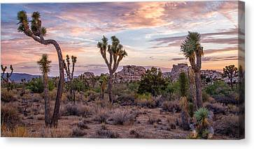 Twilight Comes To Joshua Tree Canvas Print by Peter Tellone