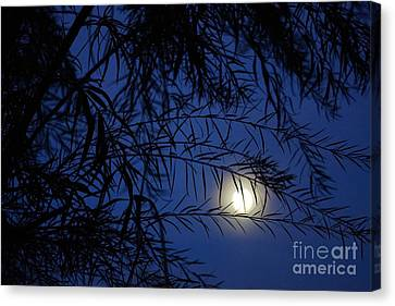 Twilight Moon Canvas Print by Kerri Mortenson