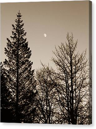Twilight Moon Canvas Print