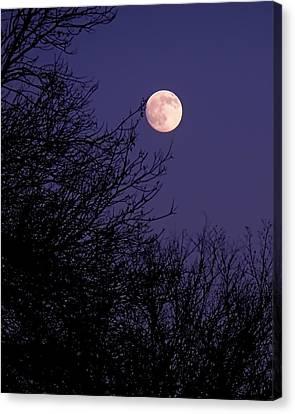 Twilight Moon Canvas Print by Rona Black