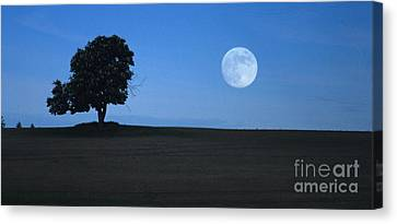 Twilight Solitude Canvas Print by Sharon Elliott