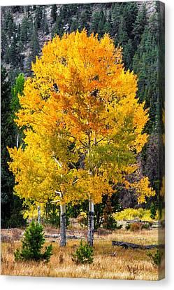 Twin Fall Trees Canvas Print