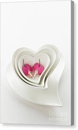 Twin Hearts 2 Canvas Print