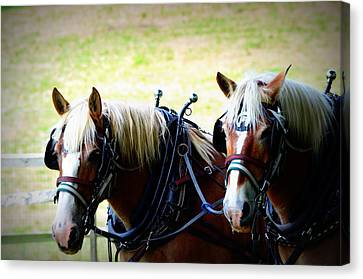 Canvas Print featuring the photograph Twin Horses by Cathy Shiflett
