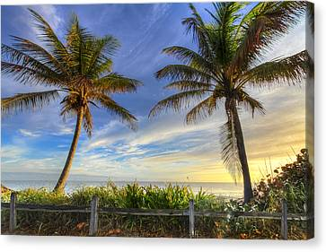 Twin Palms Canvas Print by Debra and Dave Vanderlaan