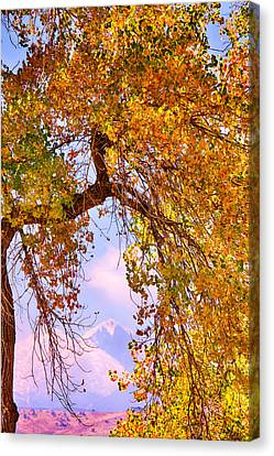 Twin Peaks - Longs Peak And Mt  Meeker Colorful Autumn View Canvas Print by James BO  Insogna