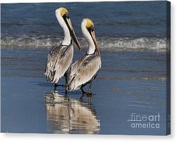Twin Pelicans Canvas Print by Deborah Benoit