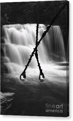 Twin Reflections Canvas Print by Dan Friend