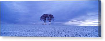 Twin Trees In A Snow Covered Landscape Canvas Print by Panoramic Images