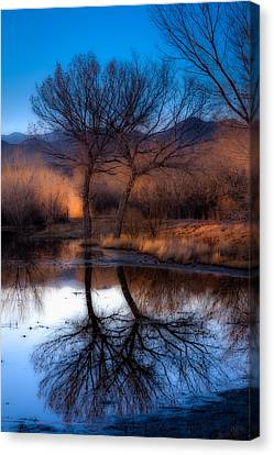 Canvas Print featuring the photograph Twin Trees by Kristal Kraft