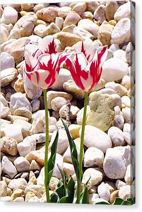 Undefined Canvas Print - Twin Tulip Beauty by Sonali Gangane
