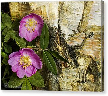 Twin Wild Roses Canvas Print