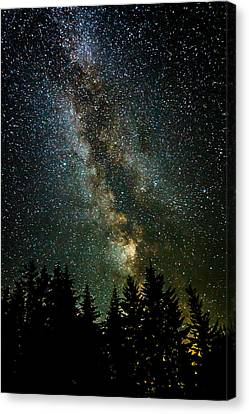 Twinkle Twinkle A Million Stars  Canvas Print by Wes and Dotty Weber