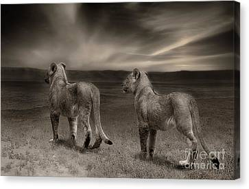 Canvas Print featuring the photograph Twins 2 by Christine Sponchia