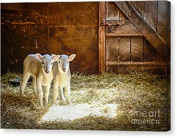 Twins Canvas Print by Alana Ranney
