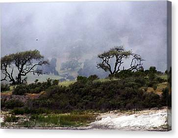 Canvas Print featuring the photograph Twins In  The Fog by Gary Brandes